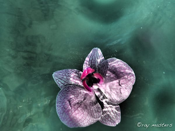 Orchid #1 Art | Ray Masters Productions