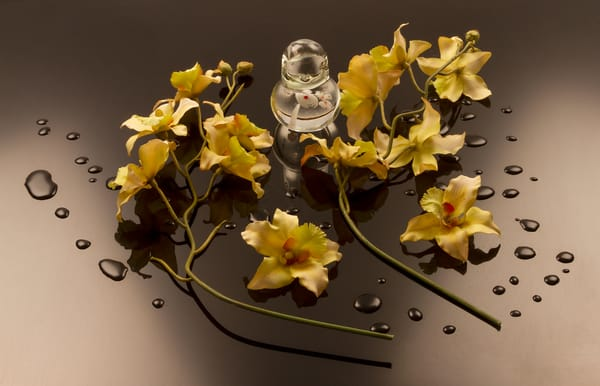 Fine Art Photograph of Flowers with Drops on Black Plexi by Michael Pucciarelli