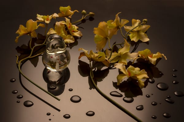 Fine Art Photographs of Flowers with Drops on Black Plexi by Michael Pucciarelli