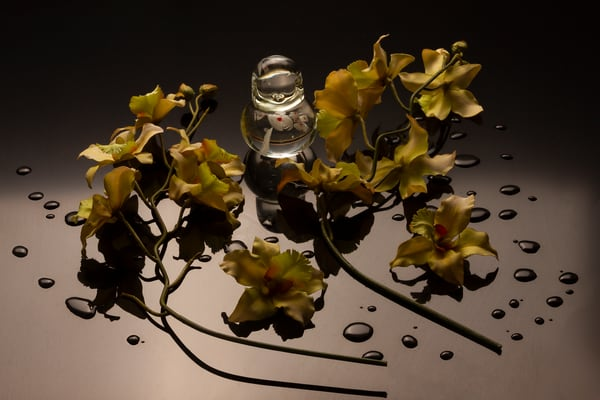 A Fine Art Photograph of Flowers with Drops on Black Plexi by Michael Pucciarelli