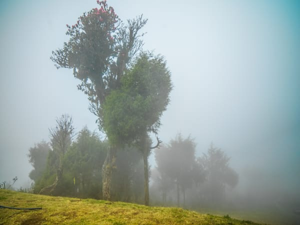 Tree in the Bhutan Clods