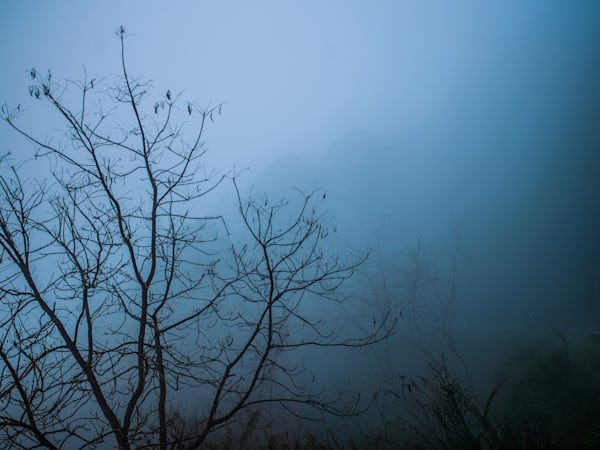Lone Tree in Bhutan Blue Fog II | Nature Art Photography