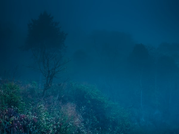 Bhutan Field In Blue Fog III | Nature Art Photography