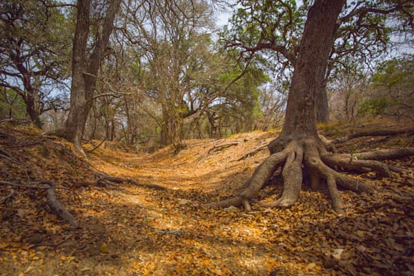 Fredericksburg Dry Creek Bed | Nature Art Photography