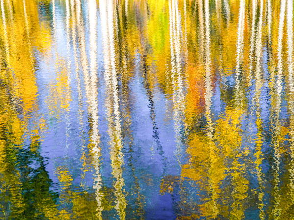 Aspen Reflection | Nature Art Photography