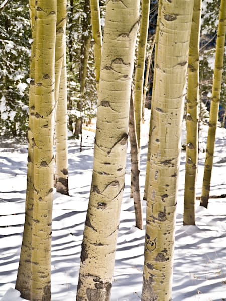 Snow In Ouray | Mountain Landscape Photography Print