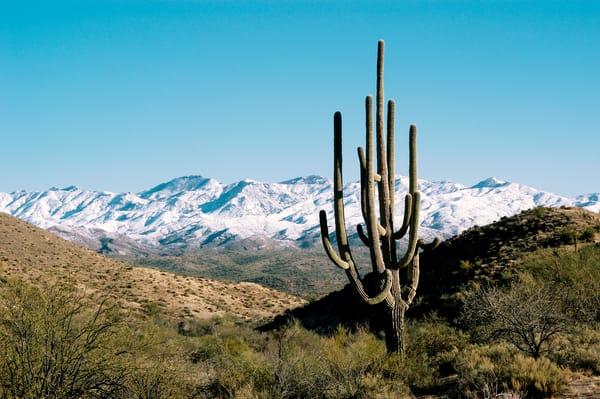 Saguaro landscape print, Jim Parkin Fine Art Photography