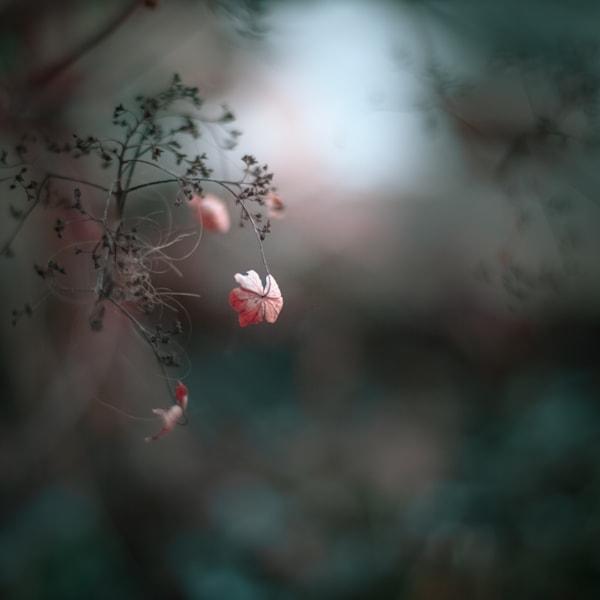 Fall Hydrangea Photography Art | Sage & Balm Photography