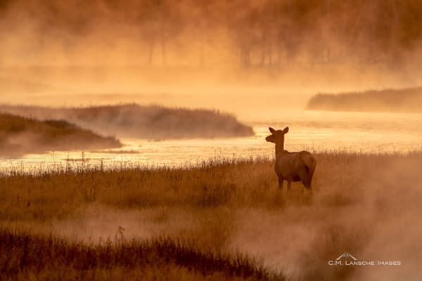 Elk In The Mist  Photography Art | Last Chance Gallery