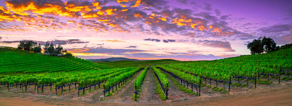 Cabernet Summer Photography Art | bodhi smith photography
