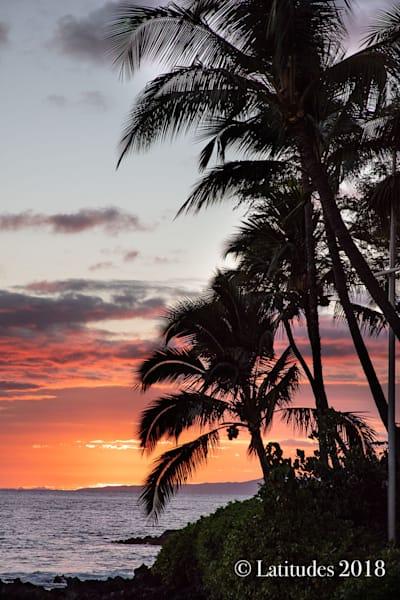 """Maui Palm Sunset"""