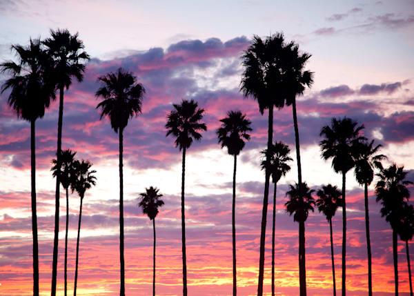 """Pink Palms"""