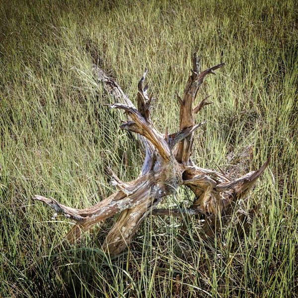Aging Driftwood