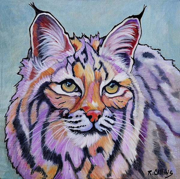 "Lynx ""Pretty Boy"" Rufus Art by rosecollinsartist.com"