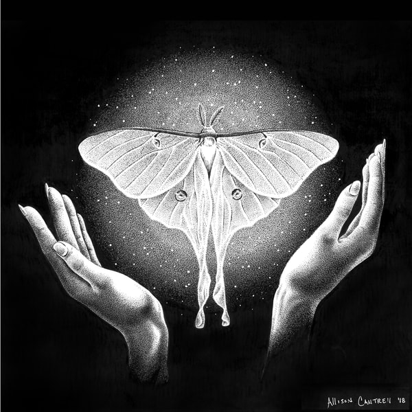 Drawn to Light pen & ink series - The Luna Moth by Allison Cantrell