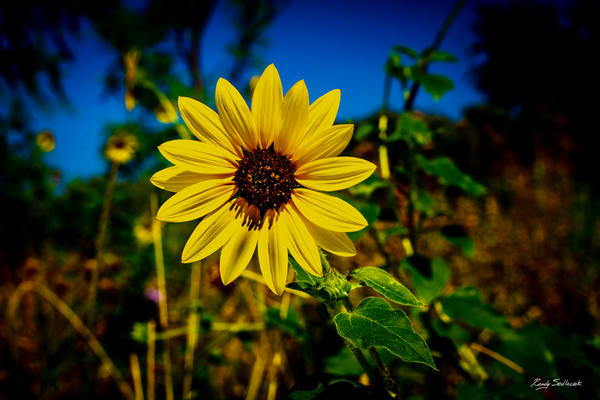 Sunny Disposition | Randy Sedlacek Photography