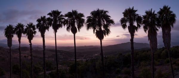 Palm Tree Sunset, San Diego, California