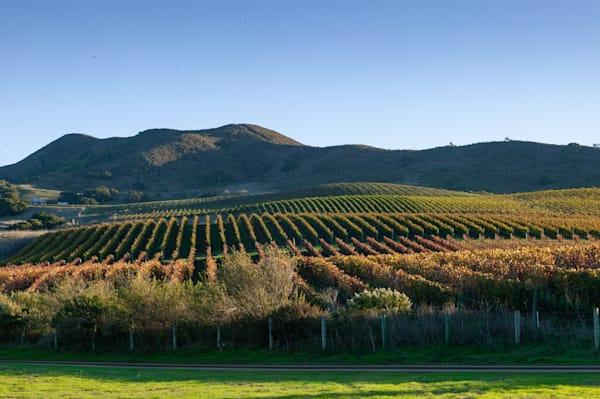 Gainey Vineyard Santa Rita Hills