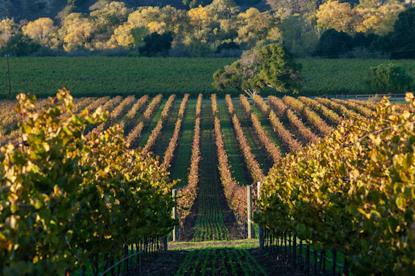 Gainey Vineyard Santa Rita Hills 3
