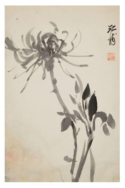 Chrysanthemum Koho Yamamoto