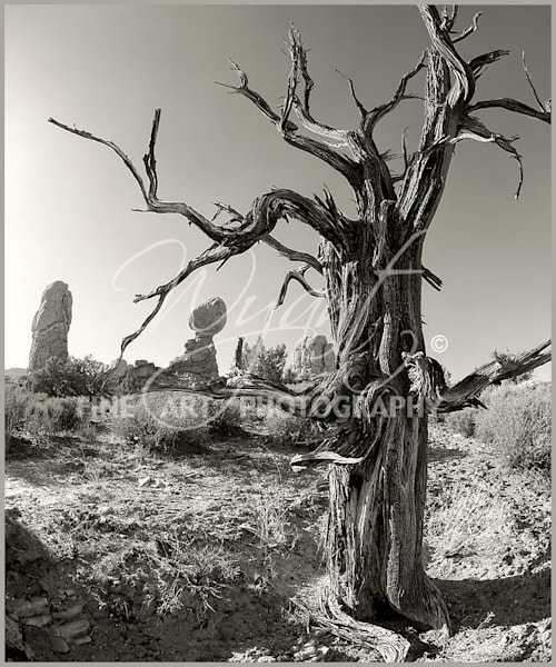 Ancient Tree:  Shop Fine Art Photography | Jim Wyant, Master Craftsman (317)663-4798