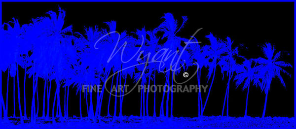 Hawaiian Blue Palms:  Shop Fine Art Photography | Jim Wyant, Master Craftsman (317)663-4798