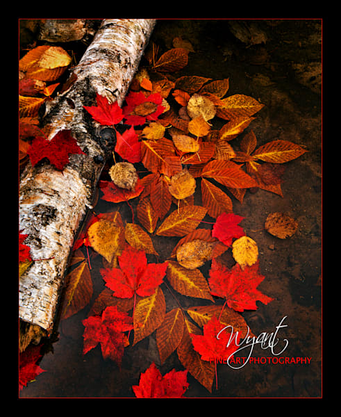 Autumn Leaves in Water: Shop Fine Art Photography | Jim Wyant, Master Craftsman