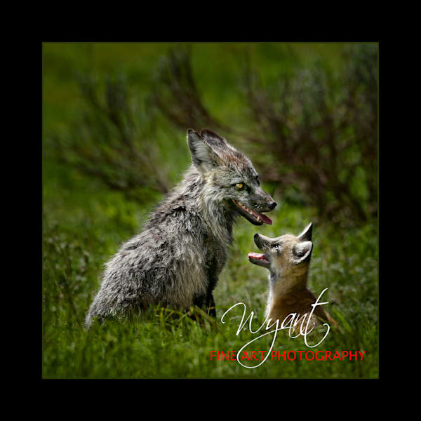 Fox Family:  Shop Fine Art Photography | Jim Wyant, Master Craftsman (317)663-4798