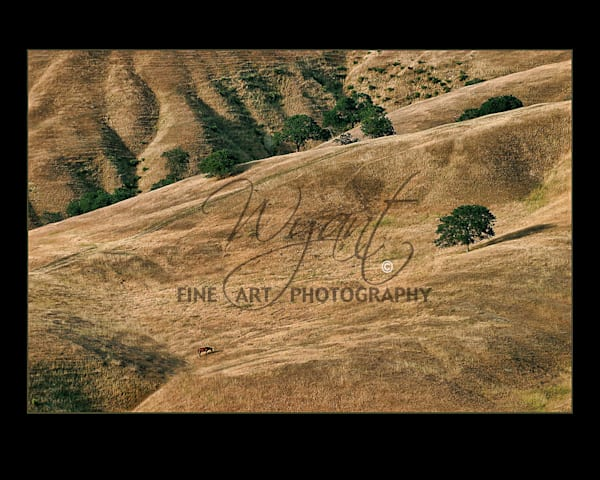 Horse on the Hill:  Shop Fine Art Photography | Jim Wyant, Master Craftsman (317)663-4798