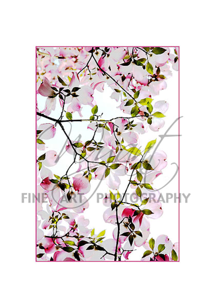 Spring Blossoms:  Shop Fine Art Photography | Jim Wyant, Master Craftsman (317)663-4798
