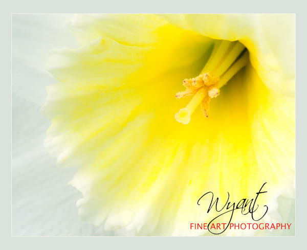 Spring Flower:  Shop Fine Art Photography | Jim Wyant, Master Craftsman (317)663-4798