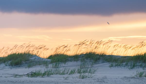 Folly Beach Sand Dunes at Sunset