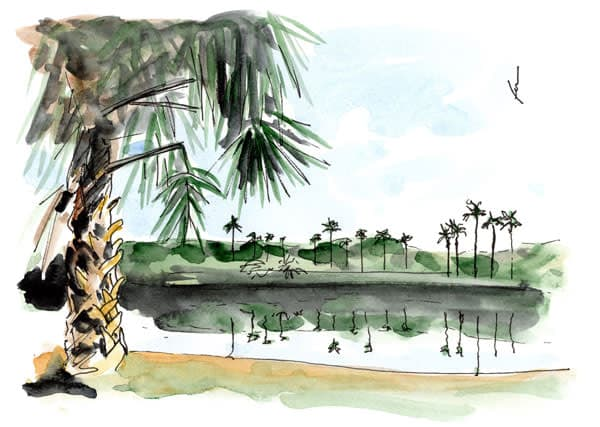 Palm Trees and Pond
