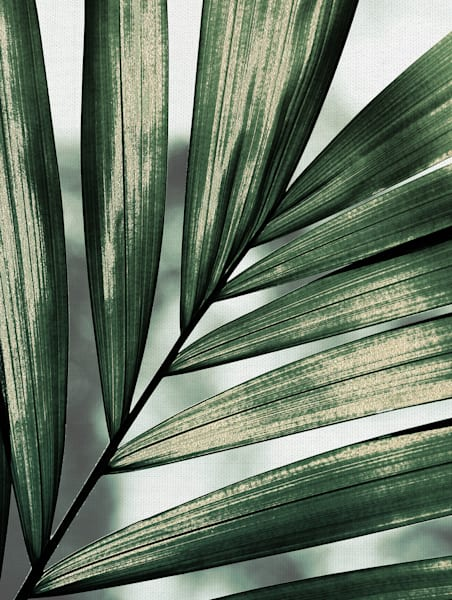 Palm Frond by artist Belle Maison Wrapped Canvas Art Print