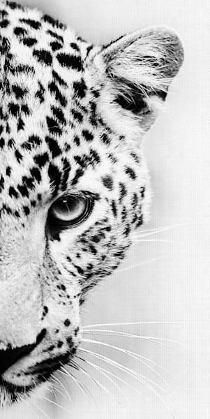 Leopard Crop by artist Belle Maison Wrapped Canvas Photo Art Print