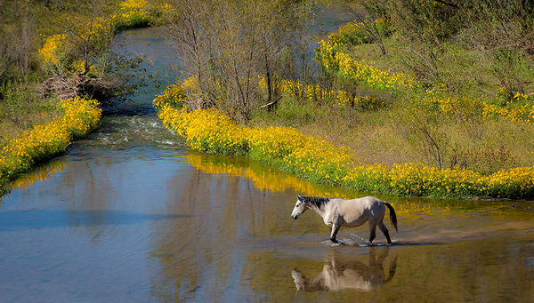 Verde River Crossing