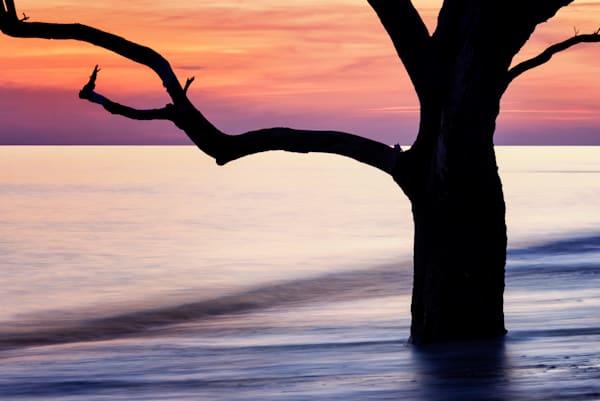 Botany Bay Simplicity