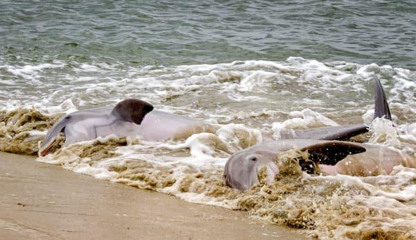 Dolphin Feed 2