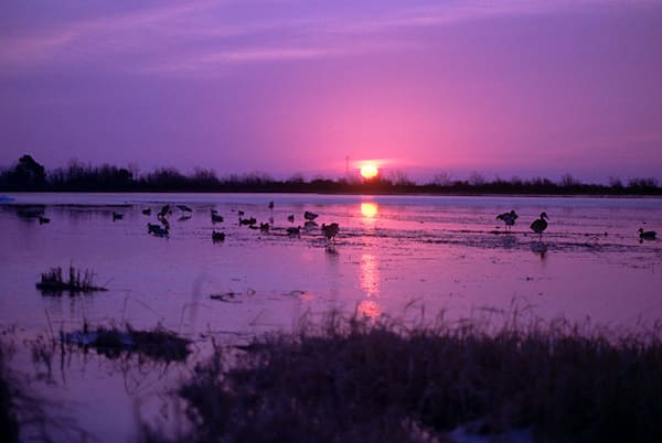 """Duck Sunset"" photograph by Jeff Druckrey Images."