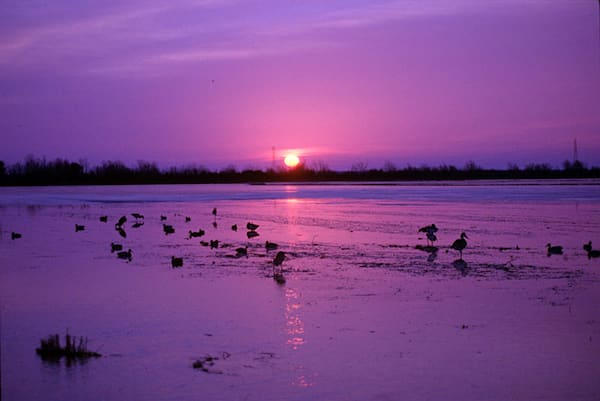 """Purple Sunset"" photograph by Jeff Druckrey Images."