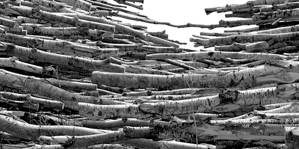 """Birch Logs"" photograph by Jeff Druckrey Images"