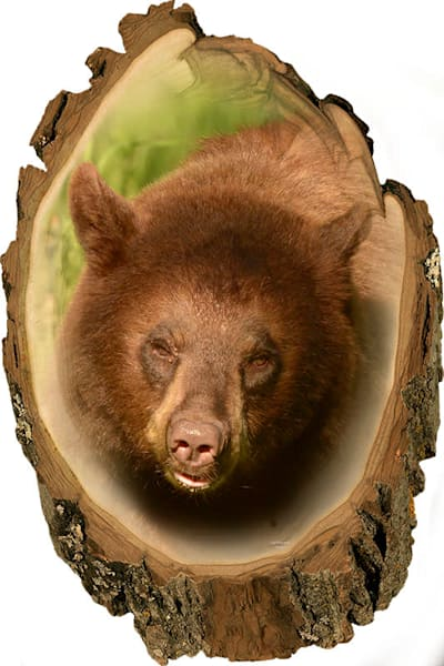 """Brown Bear"" print form photograph by Jeff Druckrey Images."