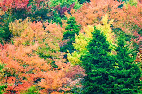 Autumn Bliss Painterly
