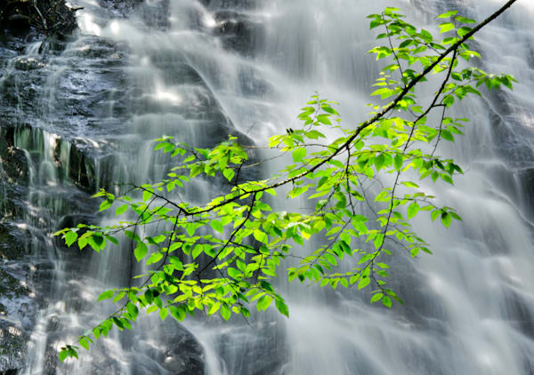 Crabtree Falls Branch
