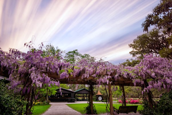 Sunset Streaks and Wisteria