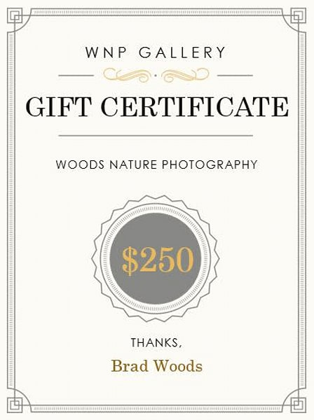 $250 Gift Card | Woods Nature Photography