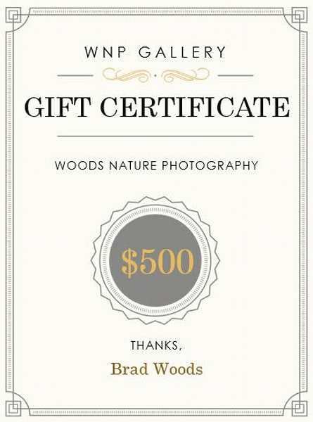 $500 Gift Card | Woods Nature Photography
