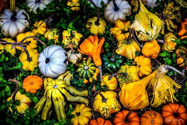 Gourd Your Heart | Randy Sedlacek Photography