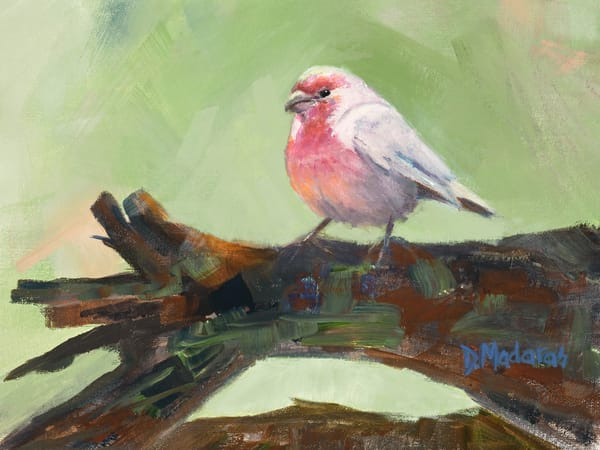 House Finch Bird Painting