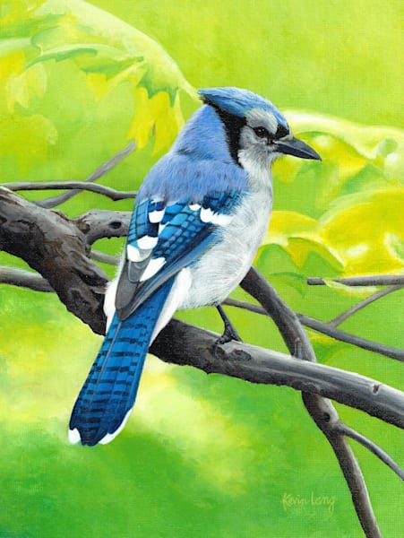 Blue Jay on a large tree